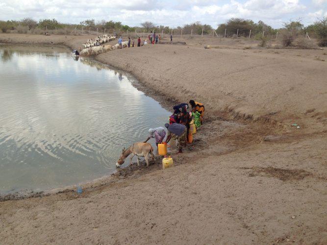 Naisia ja eläimiä Keniassa hakemassa vettä lähteeltä