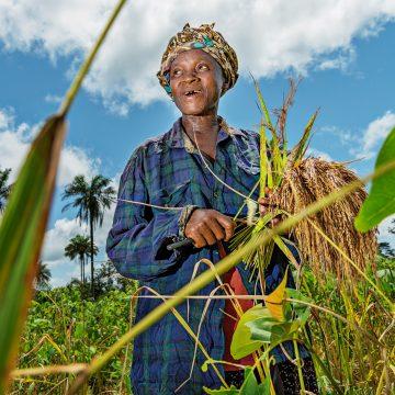 Nainen riisipellolla